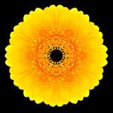 Желтый калейдоскоп мандалы цветка изолированный на черноте Стоковые Изображения
