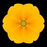 Желтый калейдоскоп мандалы цветка изолированный на черноте Стоковая Фотография RF