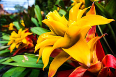 Желтый конец цветка вверх Стоковые Фото