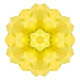 Желтый концентрический розовый цветок изолированный на белизне Дизайн мандалы Стоковые Фото