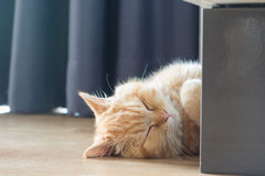 Желтый кот спать в доме на деревянном поле Стоковое Изображение