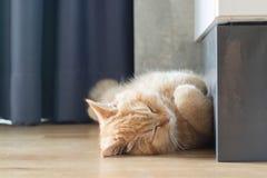Желтый кот спать в доме на деревянном поле Стоковые Фото