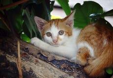 Желтый кот улицы Стоковое Фото