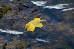 Желтый кленовый лист на волнах реки Стоковые Изображения
