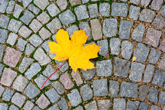Желтый кленовый лист на плитке дороги Стоковые Фотографии RF
