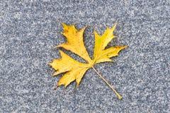 Желтый кленовый лист на серой каменной поверхности Стоковые Фото