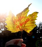 Желтый кленовый лист осени с ` надписи здравствуйте!, школа! ` В руке ` s девушки накаляет в лучах яркого солнца новый учебный го Стоковые Изображения RF