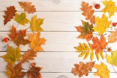 Желтый клен листьев осени с красными плодами шиповника Стоковые Фото