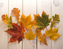 Желтый клен листьев осени с красными плодами шиповника Стоковое Фото