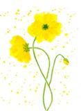 Желтый мак Стоковое Фото