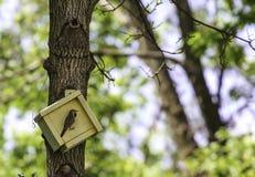 Желтый дом птицы с оккупантом Стоковые Фотографии RF