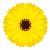 Желтый орнамент цветка мандалы Изолированная картина калейдоскопа Стоковое фото RF