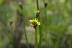 Желтый одичалый цветок Стоковая Фотография