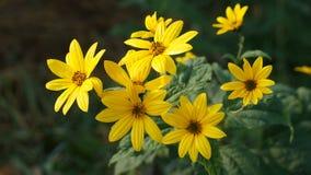 Желтый одичалый цветок Стоковое Изображение