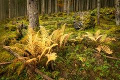 Желтый папоротник в лесе Стоковое Изображение