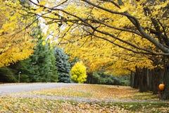 Желтый парк Стоковые Изображения