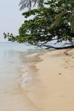 Желтый песок и зеленое дерево Стоковое фото RF