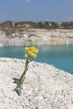 Желтый полевой цветок в горах Стоковые Изображения
