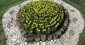 Желтый проект ландшафта цветков Стоковая Фотография RF