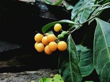 Желтый плодоовощ Стоковые Фото