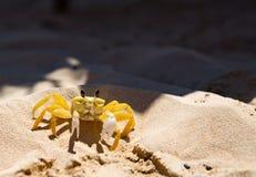 Желтый рак Стоковая Фотография RF