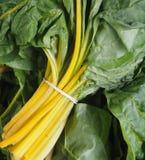 Желтый рынок фермеров мангольда Стоковая Фотография RF