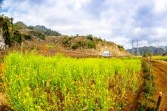 Желтый сад Wintercress этнических людей в плато Moc Chau, Вьетнаме Стоковое Изображение RF