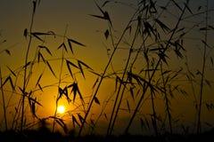 Желтый силуэт восхода солнца Стоковое Фото
