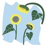 желтый солнцецвет иллюстрация вектора