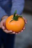 Желтый томат стоковое изображение rf