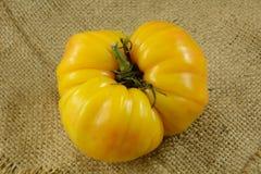 Желтый томат Heirloom стоковые изображения