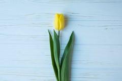 Желтый тюльпан на голубой деревянной предпосылке, романтичная зацветая карточка для ` s дня рождения, годовщины, валентинки, ` s  Стоковое Изображение RF