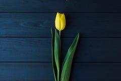Желтый тюльпан на черной деревянной предпосылке, романтичная зацветая карточка для ` s дня рождения, годовщины, валентинки, ` s м Стоковые Изображения RF