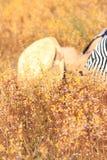 Желтый луг в ярких днях Стоковая Фотография RF
