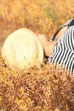 Желтый луг в ярких днях Стоковая Фотография