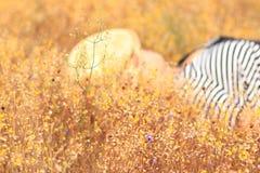Желтый луг в ярких днях Стоковые Фото