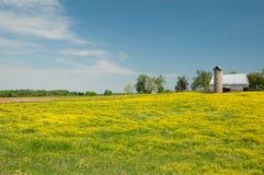Желтый луг Стоковые Изображения