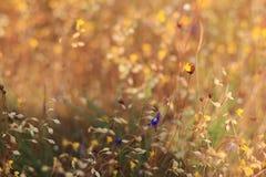 Желтый лужок Стоковое Фото