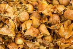 Желтый урожай луков Стоковая Фотография RF