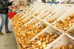 Желтый урожай луков Стоковое Изображение