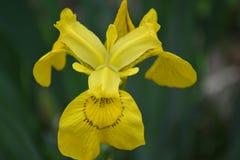 Желтый флаг Стоковая Фотография