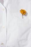 Желтый цветок в карманн Стоковое Изображение