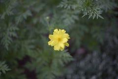 желтый цветок в парке стоковое изображение