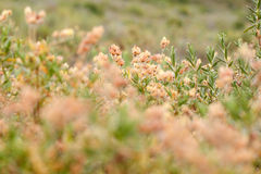 Желтый цветок в поле. Провансаль стоковое фото