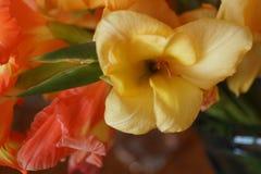 Желтый цветок гладиолуса Стоковые Изображения RF