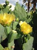 Желтый цветок кактуса Стоковые Фото