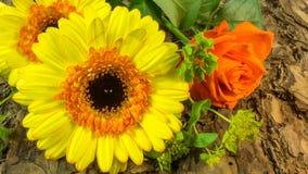 Желтый цветок как предпосылка расшива стоковые изображения rf