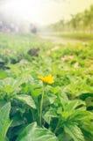 Желтый цветок красивейшее место природы Стоковая Фотография RF