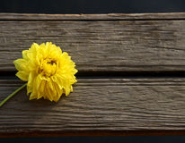 Желтый цветок на деревянном blackground стоковое изображение