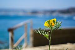 Желтый цветок на пляже Стоковое Изображение RF
